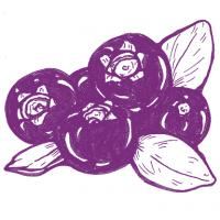 Heidelbeeri by swiss liquids